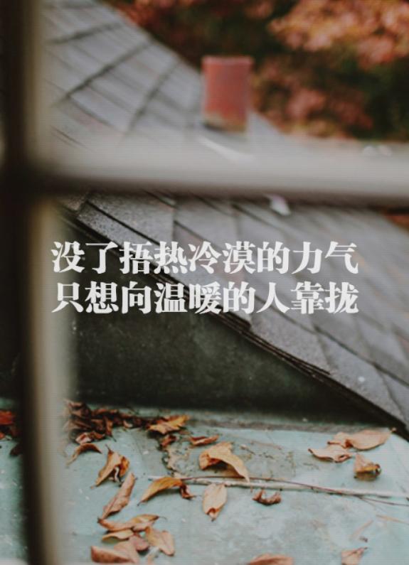 屋顶落叶带文字心情语录图片