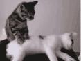 猫按摩踩奶可爱动物动态表情包