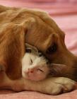 猫狗搞笑图片