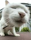 搞笑猫咪图片