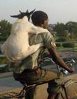 羊的搞笑图片