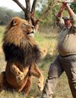 狮子搞笑图片