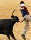 牛的搞笑图片