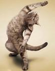 可爱瑜伽猫图片
