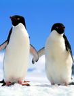 企鹅搞笑图片