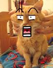 猫的搞笑图片