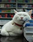 搞笑猫睡觉图片