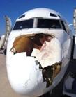 鸟与飞机相撞