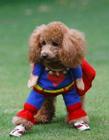 可爱狗狗萌宠图片