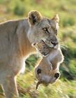 动物世界的母爱
