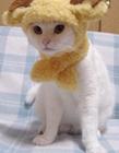 猫星人版十二星座