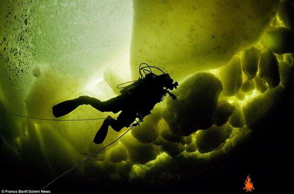 冰下海洋世界探秘