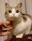 猫叔图片gif