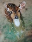 鹿搞笑gif动态图片