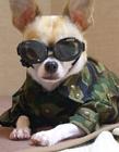 世界最时尚狗狗潮装造型