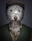 ��狗狗穿上主人的衣服