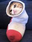 关于猫的搞笑图片