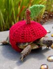 可爱乌龟穿上衣服卖萌