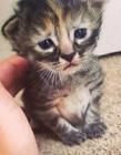 英国一只无比忧伤的新生猫