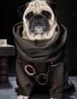 狗狗模仿美剧《权利的游戏》主角造型