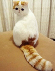 可爱猫咪gif
