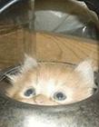 猫躲起来找不到