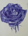 圆珠笔画蓝色妖姬教程