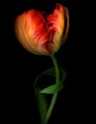 花朵盛�_�D片