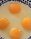 世界上最大的蛋
