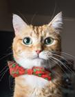 猫咪摄影师