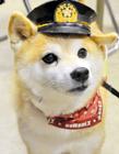 日本消防犬可可爆�t
