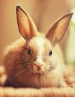 兔子图片大全