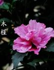 植物大全(quan)名(ming)字和�D片
