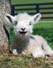动物微笑有着天然的治愈力
