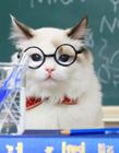 猫咪搞怪图片 猫为什么要舔毛