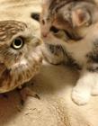 小猫头鹰和小猫咪