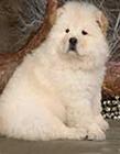 松�{(shi)犬(quan)�D片大全(quan)