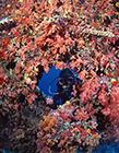 珊瑚海图片