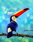 巨嘴鸟图片