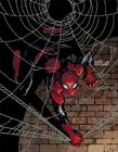 蜘蛛侠不同形态 不