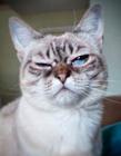 猫愤怒的表情 猫表情图片