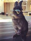 戴墨�R的兔子 一只兔子戴��墨�R