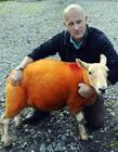 防羊被�I羊��橙色 800只羊��成橙色