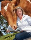 澳洲奶牛图片