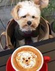 一只流浪狗的幸福生活