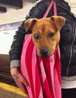 狗能带上地铁吗 小狗上地铁