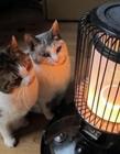 小猫烤暖炉 冬天的猫