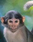 小猕猴图片