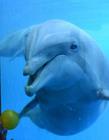 海豚的微笑 海豚笑的照片