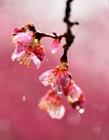 �L雨中的花朵